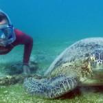 Plongée tortue verte à Mayotte