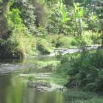 Rivière à Anjouan