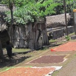 Séchage de girofle à Anjouan
