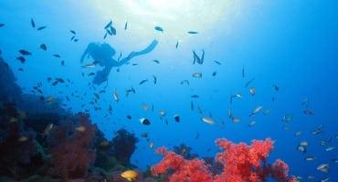 Croisière plongée à Madagascar