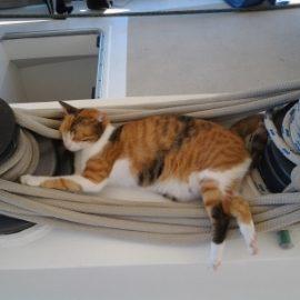 Le chat du voilier Antsiva
