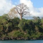 Baobab de Moéhli
