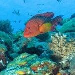 Récif corallien au nord des Mitsio