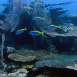 Récif corallien au nord des Mitsio - Madagascar