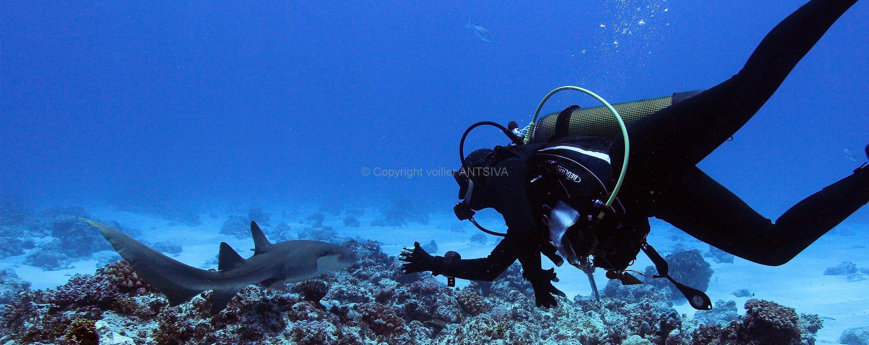 Requin nourrice en plongée aux Mitsio