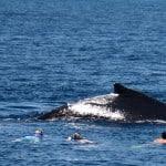Mise à l'eau avec une baleine à bosses en vacances à Madagascar