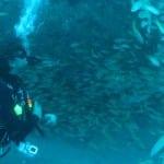 Plongée sur l'épave Mitsio