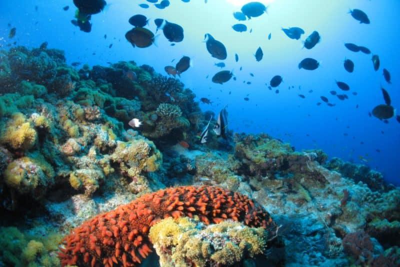 Ankazoberavina snorkel