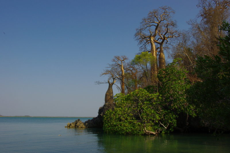 Moramba baobab