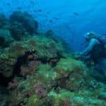 Croisière plongée Nosy Be Madagascar